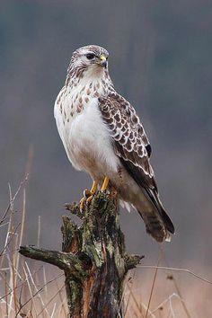 Bird Species in Setubal – photos