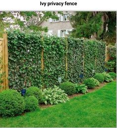 South lawn privacy fence