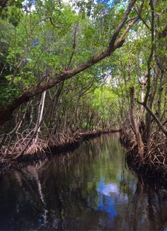 Speedy's Airboat Tours, Everglades City: See 2,185 reviews, articles, and 729 photos of Speedy's Airboat Tours, ranked No.3 on TripAdvisor among 34 attractions in Everglades City.