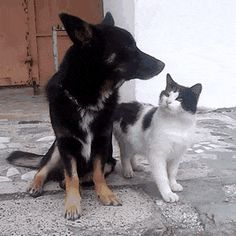 real love between cat and dog