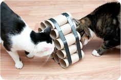 Crafty Cat Toys-toilet paper tube feeder