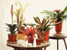 The 25 Best Indoor Plants