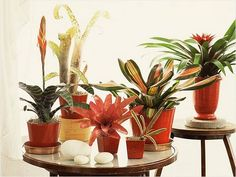 The 25 Best Indoor Plants