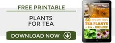60 Herbal Plants to Grow for Homemade Tea Homemade Pancake Syrup, Homemade Tea, Herbal Plants, Herbal Tea, Tea Plant, Healing Herbs, Drinking Tea, Healthy Drinks, Porches