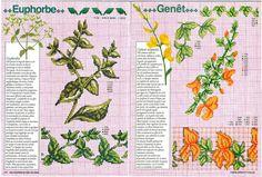 Encyclopedie du point de croix (Fleurs arbres et feuilles)