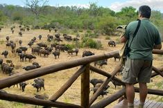 In addition to the well known Kruger National Park, South Africa has a large number of other National Parks to visit South Africa Wildlife, African Holidays, Africa Continent, African Safari, Africa Travel, Vacation Spots, Vacation Packages, Dream Vacations, So Little Time