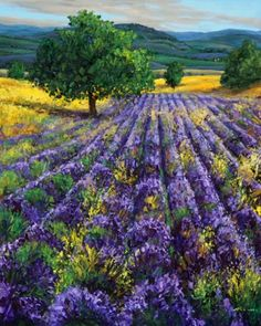 Nestled in the Hills - Lavender Fields by Jennifer Vranes -- Jennifer Vranes dailypainters.com