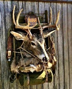 1000 Images About Hunting On Pinterest Whitetail Bucks