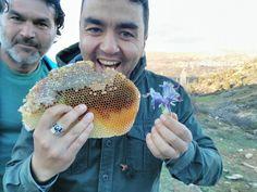 Mustafa Çelmeli abinin arıları talan eden zanlı yakalandı  Balın iyisini Yakup Çetin yer  #yakupcetincom #Bozkir #Konya #bx #Bal #honey #bees #bear