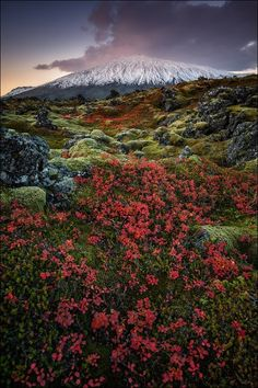 Snaefellsjokull,  #Iceland by ~D-P Photography