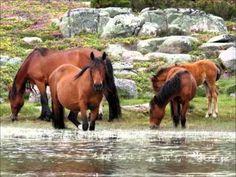 O Parque Nacional da Peneda-Gerês apresenta-se como a primeira área protegida a ser criada em Portugal (1971), pelo Decreto-Lei nº 187/71 de 8 de Maio, sendo o único com estatuto de Parque Nacional. Localiza-se na região norte de Portugal, compartindo fronteira com a Galiza, que forma uma paisagem contínua com o Parque Natural da Baixa Limia-Serra do Xurés, no município de Lóbios, em Espanha.