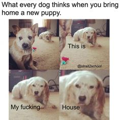 What every dog... funny pics, funny gifs, funny videos, funny memes, funny jokes. LOL Pics app is for iOS, Android, iPhone, iPod, iPad, Tablet