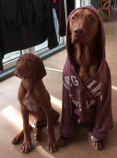 3234 Bilder Dogs Besten In 2019HundeTiere Von Und Die 80kwXnPO