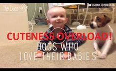 #VIDEO:Dogs Who Love Their Babies (#Cute #Phoenix #Gilbert #Ahwatukee #AZ #Scottsdale #Mesa): http://www.apeacefulfarewell.com/the-paw-blog/video-dogs-who-love-their-babies