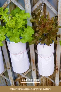 How To Build A DIY Wick System For Your Hydroponic Garden | A wick system is the easiest and the most basic among all hydroponic gardening methods. This is best for beginners and aspiring gardeners who want to try soilless gardening. I'll show you how to build a wick system using materials you might already have at home!