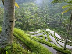 This is where my sister is right now!! Ubud, Bali. AHHHHHHHHH. So insanely jealous, it looks like the earth's little secret sanctuary. BEAUTIFUL.