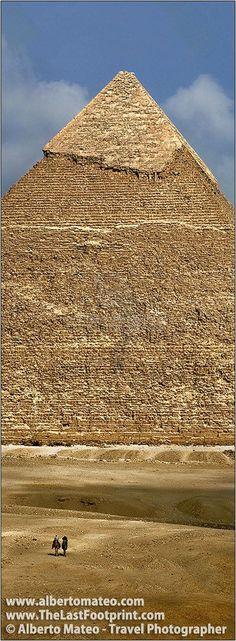 Camels under Giza Pyramids. El Cairo. #Egypt