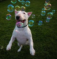 I like bubbles and puppies   ...........click here to find out more     http://googydog.com