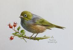 Tautou - Silvereye  watercolour Jane Sinclair Nz Art, Nature Journal, Watercolor Bird, Bird Art, Animals And Pets, Planting Flowers, New Zealand, Nativity, Birds