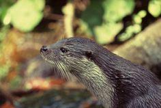 L'Oasi di Persano-Serre è l'habitat natuale per moltissime specie vegetali ed animali, in particolare è il rifugio ideale della rara lontra. Greenhouses