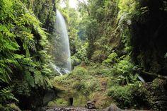 El Bosque de los Tilos: senderismo en La PalmaTrekking por una naturaleza jurásica