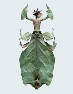 Leaf Insect Fashion