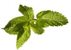 foods that fight pain: mint