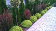 Landscaping Retaining Walls, Privacy Landscaping, Modern Landscaping, Garden Landscaping, Front Garden Landscape, Landscape Plans, English Garden Design, Indoor Trees, Hardy Plants