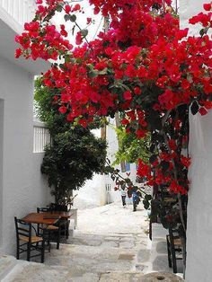Spring ambience ~ Cyclades