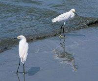 Golfos y Bahías de Colombia - Colección Ecológica del Banco