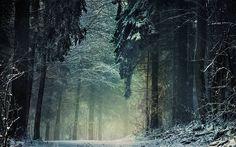 Jour d'hiver sombre dans les bois.