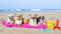 Florida's Space Coast to Promote Pet-friendly Hotels, Beaches