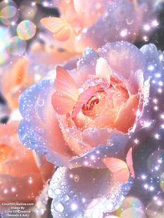 Beautiful Wallpaper Pictures, Beautiful Flowers Pictures, Beautiful Flowers Wallpapers, Pretty Wallpapers, Amazing Flowers, Amazing Wallpaper, Rose Flower Wallpaper, Wallpaper Nature Flowers, Flower Backgrounds
