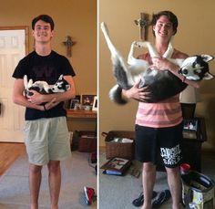 30 incríveis fotos antes e depois de cães crescendo