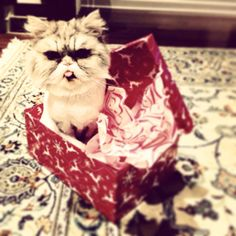 Gift wrap Cat Love, Gift Wrapping, Cats, Animals, Paper Wrapping, Gatos, Animais, Animales, Animaux