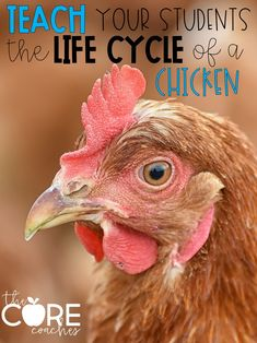 This unit begins by getting students excited about the life cycle of a chicken. You will establish background knowledge by teaching students the stages of a life cycle. Students will also explore the inside of an egg. Next, you will teach each stage of the life cycle by completing a close read, text coding, and taking notes.  During each lesson you will model close reading, text coding, and note-taking. Students will have a chance to practice the modeled strategy in partners and independently.