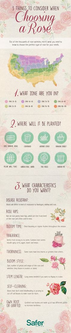 What type of rose should I plant? 3 things to consider when choosing a rose
