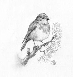 Ideas For Colorful Bird Drawing Nature Bird Drawings, Pencil Art Drawings, Easy Drawings, Animal Drawings, Drawing Sketches, Robin Vogel, Robin Drawing, Tatoo Bird, Bird Sketch