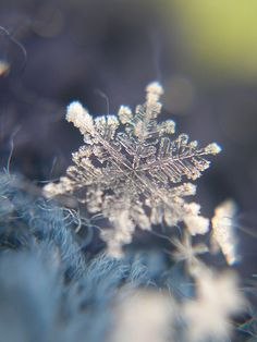 """""""Snowflakes that stay on my nose and eyelashes"""" are one of our favorite things too. What's your favorite? #Moments2Give"""