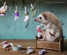 Фотография Unpaired socks. All of the people))) автор Elena Eremina на 500px