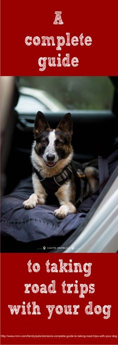 Here's everything you need to know to make sure that your pooch is ready for the open road — and that your journey together will be as smooth as possible.