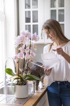 Slik lykkes du med orkidé | Stelletips fra Mester Grønn Scandinavian Style, Planters, Garden, Flowers, Garten, Lawn And Garden, Gardens, Plant, Window Boxes