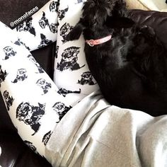 Chilling with Mommy 😴 Custom Leggings, Schnauzer, Chilling, Alexander Mcqueen Scarf, Baby Items, Dog Lovers, Gift Ideas, Photo And Video, Dogs
