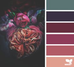 Explore Design Seeds color palettes by collection. Purple Color Schemes, Dark Color Palette, Dark Colors, Colours, Colour Palette 2018, Purple Color Palettes, Color Schemes Design, Pink Color, Design Seeds