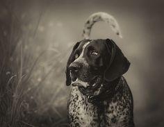 Steel - bluetick coonhound | Flickr - Photo Sharing!