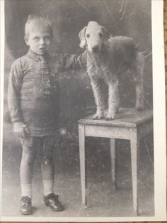 Roy baxendale and bedlington terrier Pet Pictures, Black And White Dog, Vintage Dog, Old Dogs, Poodles, Beautiful Dogs, Terriers, Doggies, Mad