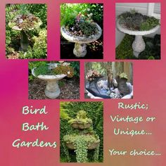 Bird Bath Gardens...