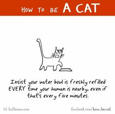 cute funny cat quote. This is so true!!!. Please also visit www.JustForYouPropheticArt.com for colorful-inspirational-Prophetic-Art and stories. Thank you so much! Blessings!