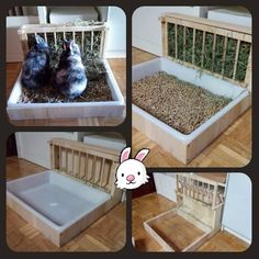 Der FINAL Feeder endlich made in Spain! Nur 40 (Handlieferung in Ma Bunny Cages, Rabbit Cages, House Rabbit, Rabbit Life, Indoor Rabbit Cage, Rabbit Litter Box, Rabbit Toys, Pet Rabbit, Diy Guinea Pig Cage