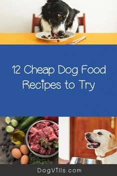 Worried about how you'll feed your dog when food is scarce and money even scarcer? Check out these 12 cheap dog food recipes! Best Cheap Dog Food, Best Dog Food, Dog Breakfast, Homemade Breakfast, Dog Health Tips, Health And Wellness, Meat Patty Recipe, List Of Veggies, Animales